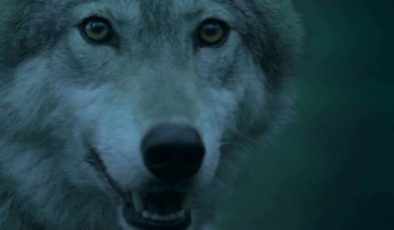 MICHAEL LOCKSHIN – WOLF IS BACK